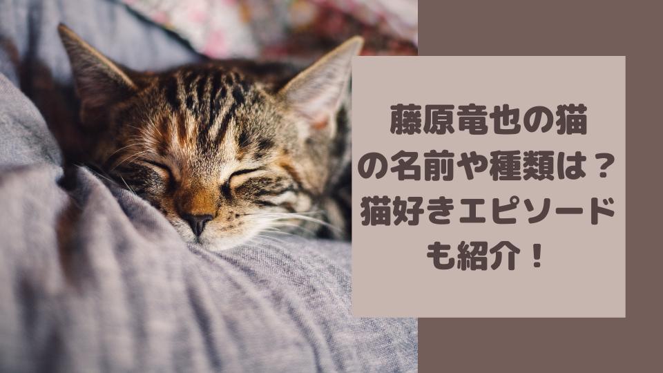 藤原竜也の猫の種類と名前