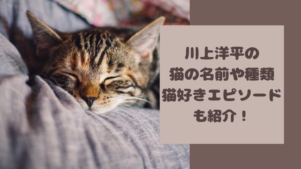 川上洋平の猫の名前と種類